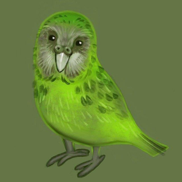 pták kakapo