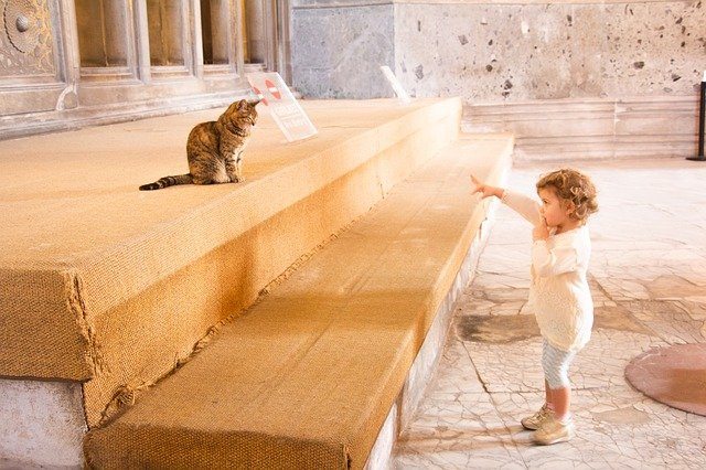 dítě a kočka