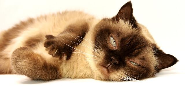 ospalá kočka